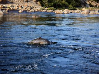 Рыболовный участок, на котором разрешена лицензионная рыбалка на лосося...